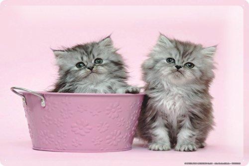 Blechschild Katze Deko Welpe Kätzchen