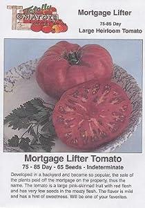 Mortgage Lifter Tomato 65 Seeds - Heirloom!