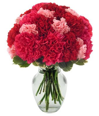 Flowers - Very Berry Carnations