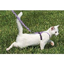 Premier Pet COME WITH ME KITTY Cat Harness Medium Blue