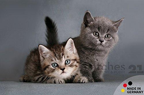 fussmatte-fussabstreifer-flat-kitten-zum-abstreifen-oberseite-aus-polyester-ruckseite-rutschfest-1-s