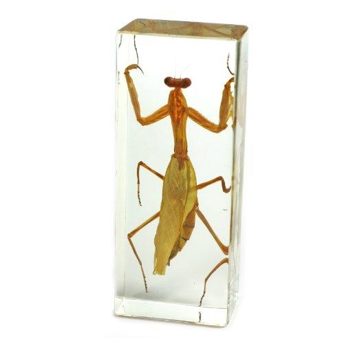 """Praying Mantis Paperweight (4.4x1.6x1.1"""")"""