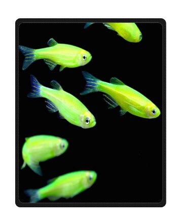 Custom Funny Electric Fish 40 X 50 Inches(Small) Fleece Blankets Throws