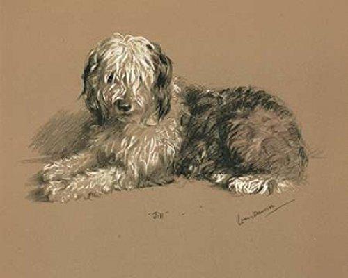 lucy-dawson-sheepdog-jill-artistica-di-stampa-2540-x-3048-cm