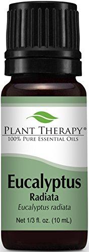 Eucalyptus Radiata Essential Oil. 10 ml (1/3 oz) 100% Pure, Undiluted, Therapeutic Grade