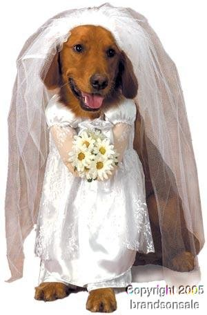 Pet Bride Dog Halloween Costume For Large Dogs