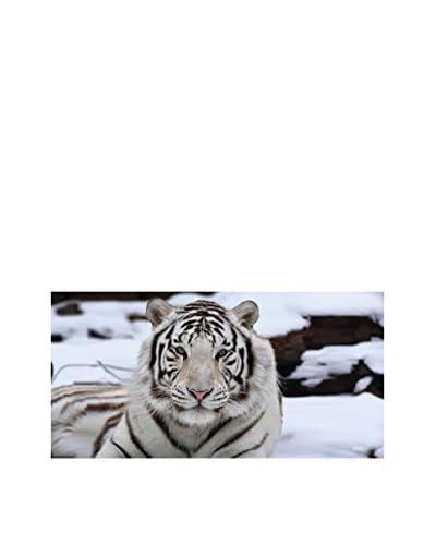 OVVIO Lienzo Tiger