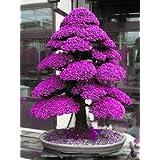 MUKAseeds - Bonsai - Details About 100PCS Rare Tree bonsais Bonsai Plant Japanese Cedar (Color: 2)
