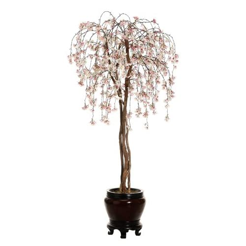 6.5 Cherry Blossom Tree in Container Pink Cream