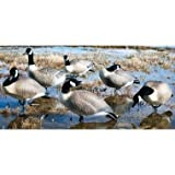 6 - Pk. Hard Core Full Body Canada Goose Finish Decoy Set