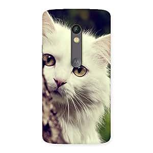 Ajay Enterprises Fill Hiding Cat Multicolor Back Case Cover for Moto X Play