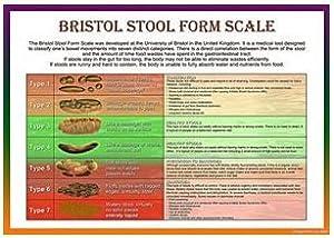 Bristol 6