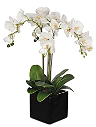 House of Silk Flowers Artificial Triple-Stem Phalaenopsis Orchid Arrangement, White/Yellow