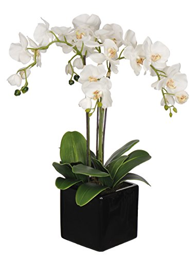 Artificial Triple-stem Phalaenopsis Orchid Arrangement Cream/yellow