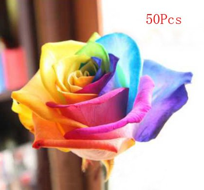 50Pcs Rose Seeds Blue Red Purple Pink Black Petals Plants Home Garden Flower