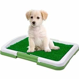 Amazon Com Puppy Potty Trainer Indoor Grass Training