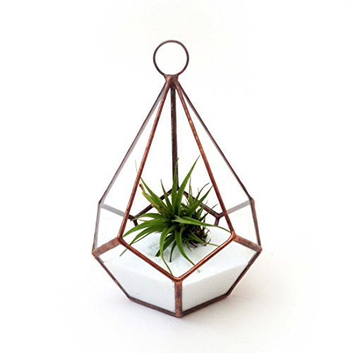 Tropfenform-klein-mit-Schlaufe-Geometrische-Glas-Terrarium-Air-Wei-SandModern-Pflanzgeffr-den-GartenbauHandgefertigt-von-loveglass-glas-Bright-Copper-Teardrop-Small-with-Loop-Air-Plant-Sand-12x12x17