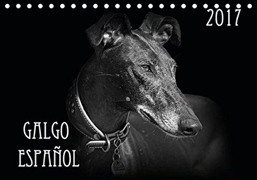 galgo-espanol-2017-tischkalender-2017-din-a5-quer-ausdrucksstarke-schwarz-weiss-portraits-vom-galgo-
