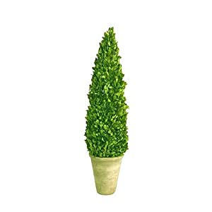Mills Floral Company Box Cone Topiary, Small, 16""