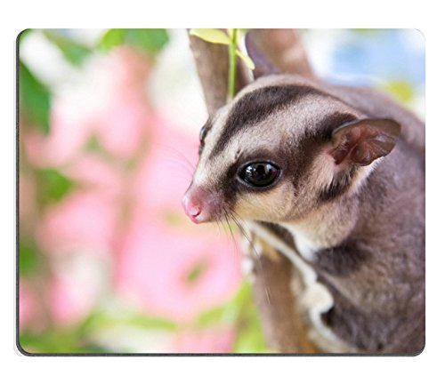 Sugar Glider Mousepad
