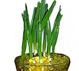 Da.Wa 10 Bolsa / Porción en Forma de Perla de Cristal del Suelo Granos del Agua del Fango Grow Jalea Mágica Bolas de la Boda Decoración