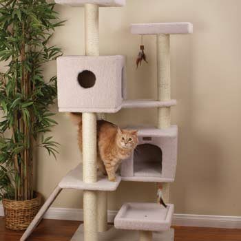 Where to buy Petco Premium Tree Highrise for Cats 26 7 L X