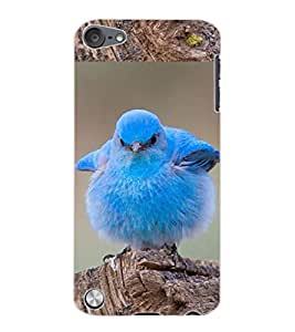 ColourCraft Cute Bird Design Back Case Cover for APPLE IPOD TOUCH 5