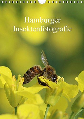 hamburger-insektenfotografie-wandkalender-2015-din-a4-hoch-insekten-faszinierende-bunte-wunderwelt-m