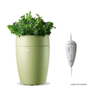 Essential Oil Diffuser With Sprouts On Top