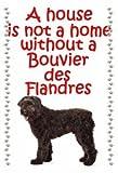 Magnetsandhangers Bouvier Des Flandres - Novelty Dog Fridge Magnets - House