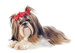 Wallmonkeys WM99327 Shih Tzu Peel and Stick Wall Decals (24 in W x 17 in H)