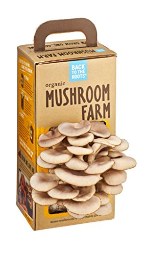 Back-to-the-Roots-Oyster-Mushroom-Kit