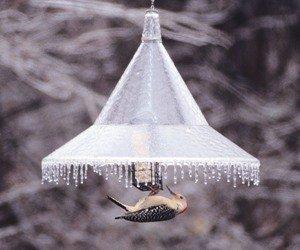 Buy Low Price Pole Mounted Bird Feeder Squirrel Baffle-Clear (AR154-P)