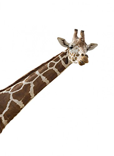 Wallmonkeys Photo of a Giraffes Neck and Head Peel and Stick Wall Decals WM332839 (18 in H x 13 in W) (African Safari Pictures compare prices)