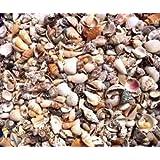 Hinterland Trading Fairy Garden Tiny Seashells 250+ Sea Shells
