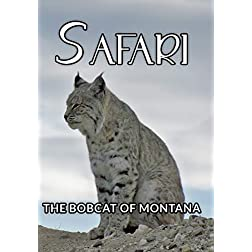 Safari The Bobcat Of Montana