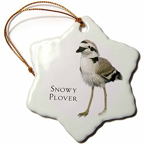 Ornaments to Paint 51597_1 Snowy Plover Shorebird Snowflake Porcelain Ornament, 3-Inch