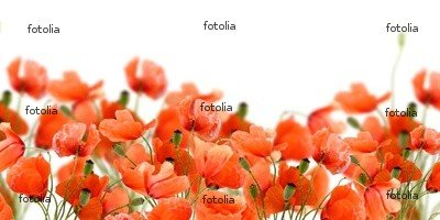 """Wallmonkeys Peel and Stick Wall Decals - Poppy Flowers - 24""""W x 12""""H Removable Graphic"""