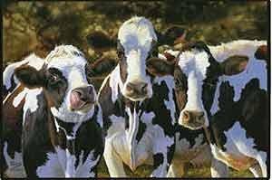 dairy-queens-doormat-art-by-bonnie-marris