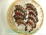 天然・無頭シータイガーえび(規格:6/8) 約64g/尾 約9尾 小分け ランキングお取り寄せ