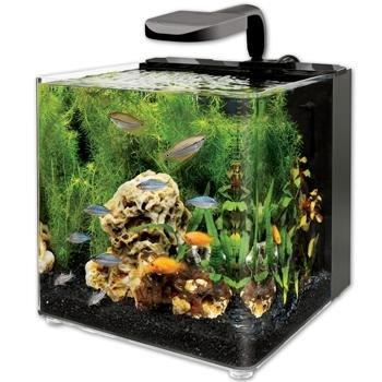 Lowest price aqueon evolve 8 led aquarium kit 8 gallons for Petco betta fish price