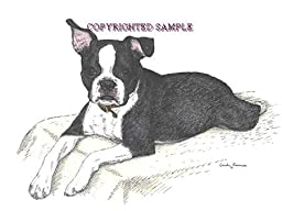 Boston Terrier Puppy - 9x12 Drawing by Cindy Farmer