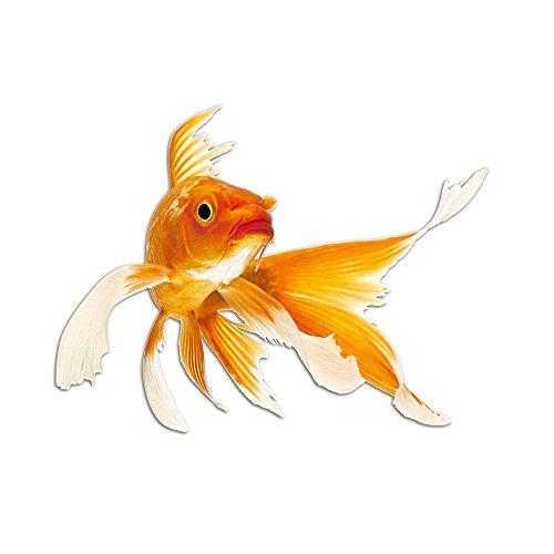 adesivi-da-muro-per-il-bagno-goldfish-pesce-bagno-wc-75x57cm