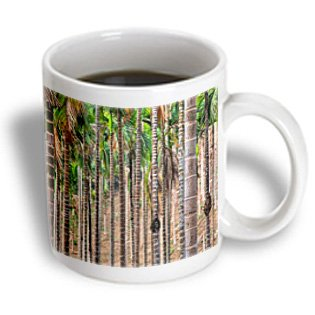 Danita Delimont - Brent Bergherm - Trees - Asia, India, Meghalaya, Bajengdoba. Beetle Nut Trees. Trunk Detail. - 15Oz Mug (Mug_187286_2)