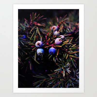 Juniper Berry by Mary Berg