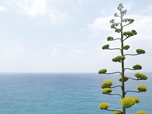 Lais Puzzle Baum vor dem Meer 2000 Teile