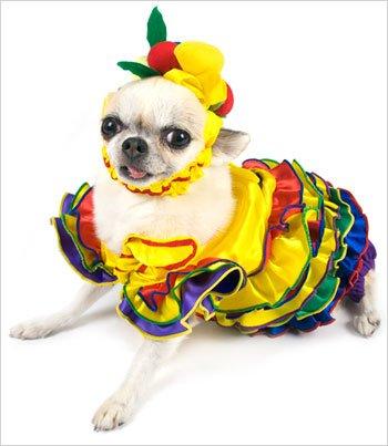 686ec660556 Calypso Queen Dog Costume Size 4 12 5 l x 16 18 5 g - Karen E. Baileyioz