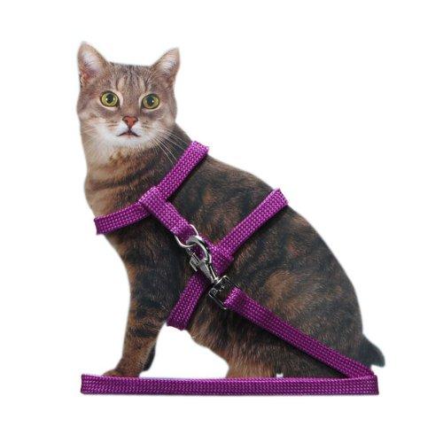 laisse collier harnais reglable nylon pour chat chaton longueur 4couleurs au 1 98. Black Bedroom Furniture Sets. Home Design Ideas