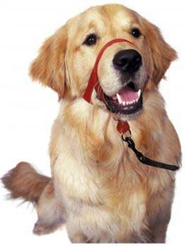 Halti Nylon Dog Headcollars with Safety Loop, 0-Size, Black