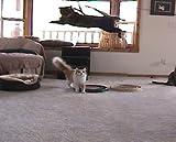 The Da Bird Ultimate Refill Pack (Includes: 1 Original Refill, 1 Kitty Puff Refill, 1 Sparkly Refill, 1 Fun Fur Refill, 1 Cat Catcher Refill & 1 Laser Pointer) for the Da Bird Cat Toy